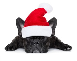 french bulldog dog with red  christmas santa claus hat  for xmas holidays sleeping , isolated on white background