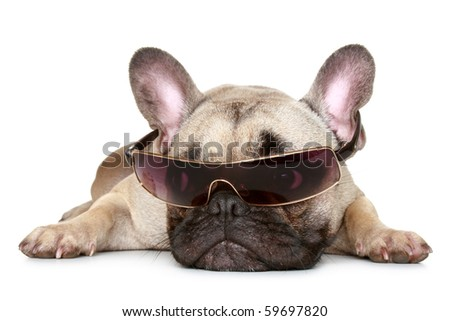French bulldog in sunglasses lies on a white background