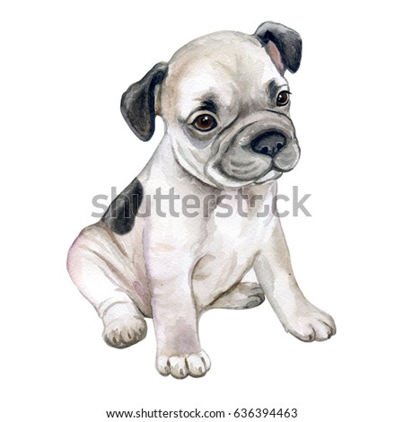 French bulldog isolated on white background. Puppy is black and white. Watercolor. Illustration. Image. Picture