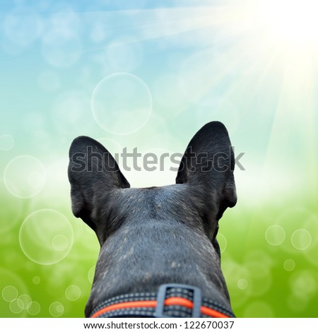 French bulldog on the green natute background