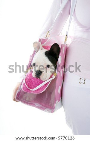 French bulldog puppy inside of pink polka dot doggy purse being carried by girl dressed in white and pink, isolated on white background