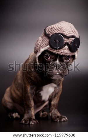 French bulldog puppy, 3,5 moumth old, in knit pilot helmet, on black background - stock photo
