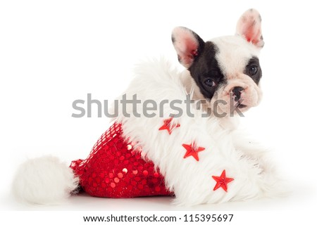 French Bulldog puppy sitting into christmas hat