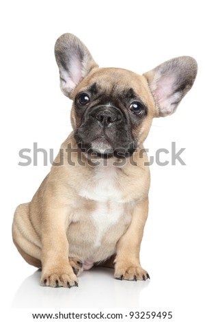 French bulldog puppy sitting on a white background