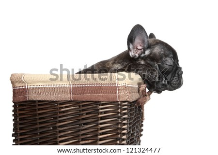 French bulldog puppy sleep in basket (side view) over white background