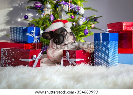 French bulldog under the Christmas tree with presents