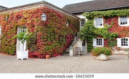 french castle courtyard. Ivy vine climbing on a front of building