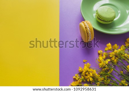 French Colorful green and yellow Macarons flatlay. Colorful Pastel Macarons on a green saucer with yellow daffodil flower on yellow and purple Background. Color Schemes. free spot for text