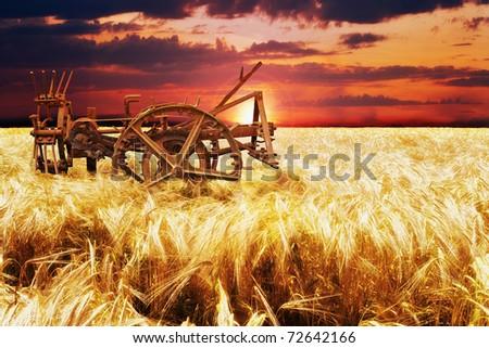 French cornfield