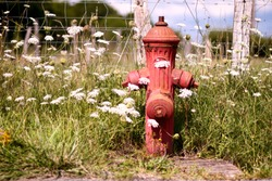 French fire hydrant, Red hydrant between flowers