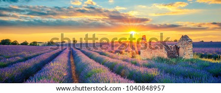 French lavender field at sunset. #1040848957