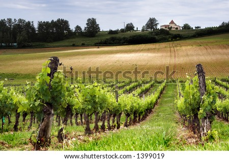 French vineyard along the Garonne river