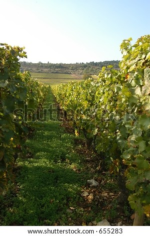 French vineyards, Champagne, France - stock photo
