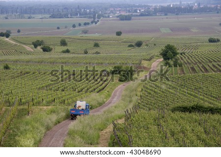 French vineyards in the Alsace area. A small farmer truck is driving down a curved road to work in the fields.