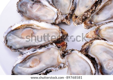 fresh alive oysters