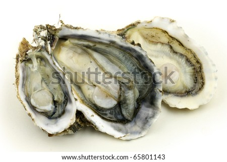 fresh alive oysters on a white background stock photo