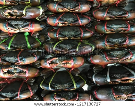 Fresh alive sea crabs tied for sell in seafood restaurant #1217130727