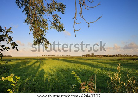 Fresh and bright green field in summer