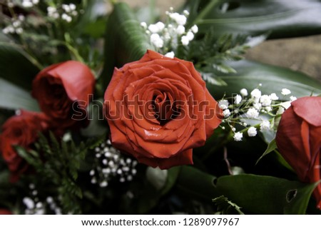 Fresh and fragrant roses, detail of romanticism and love #1289097967