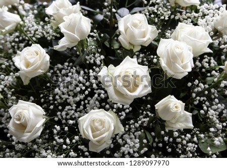 Fresh and fragrant roses, detail of romanticism and love #1289097970