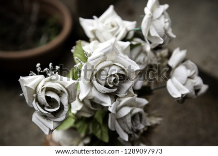 Fresh and fragrant roses, detail of romanticism and love #1289097973