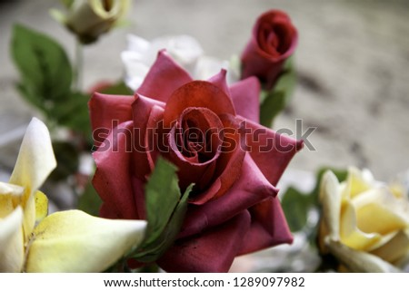 Fresh and fragrant roses, detail of romanticism and love #1289097982