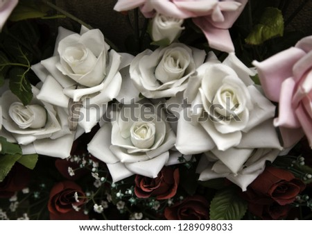 Fresh and fragrant roses, detail of romanticism and love #1289098033