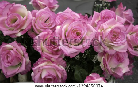 Fresh and fragrant roses, detail of romanticism and love #1294850974