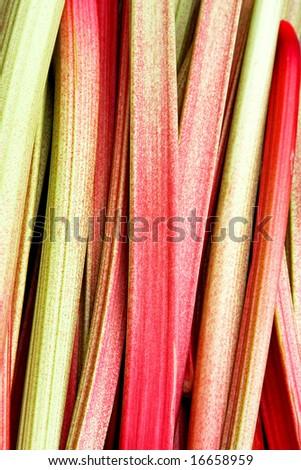 Fresh and organic vegetable plant rhubarb chard