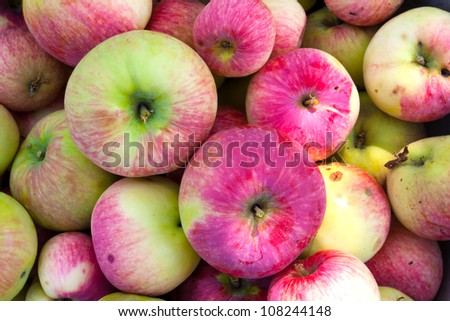 fresh apple - abstract natural background