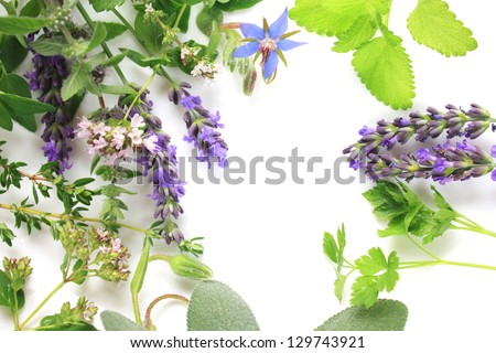 Fresh aromatic herbs border composition