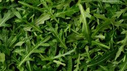 fresh arugula leaves top view