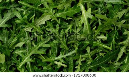 fresh arugula leaves top view ストックフォト ©