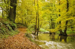 Fresh Autumn forest and calm river