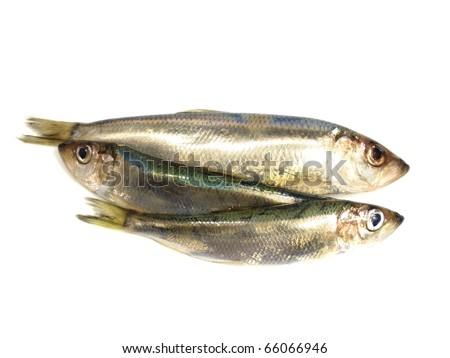 Fresh Baltic herring fish on white background