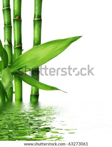 Fresh Bamboo #63273061