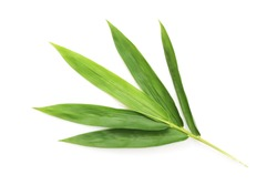 Fresh bamboo leaves isolated on white background.
