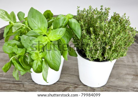 fresh basil and fresh thyme in white pots on a wooden table - stock photo
