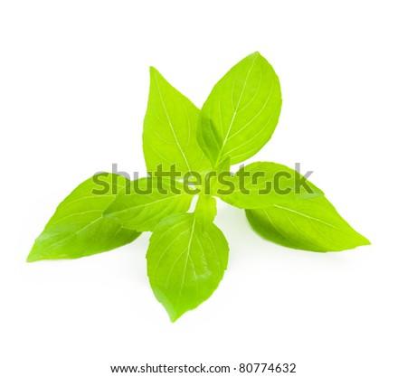 Fresh Basil / close-up on white background