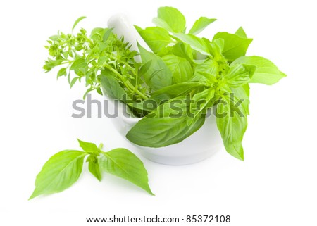 Fresh basil  herbs whith mortar and pestle / isolated on white