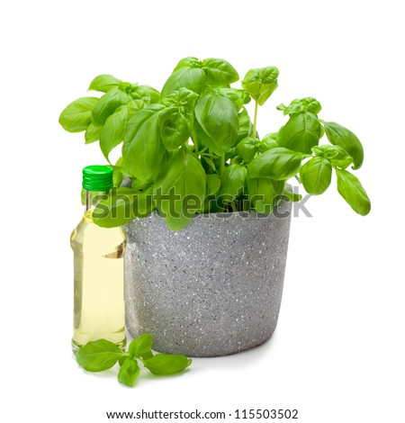 fresh basil in a pot with a bottle of oil