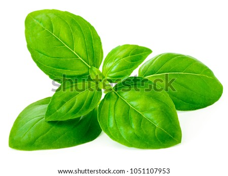 Fresh basil leaf isolated on white background, close up. Basil herb - Shutterstock ID 1051107953