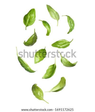 Fresh basil leaves falling on white background Сток-фото ©