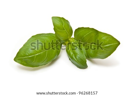 Fresh Basil leaves isolated on a white studio background.
