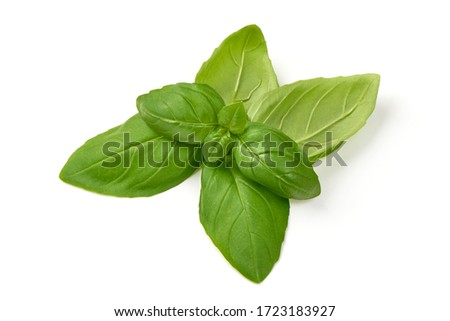 Fresh basil leaves, isolated on white background. Foto d'archivio ©