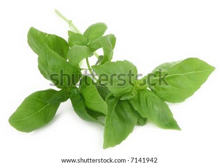 fresh basil leaves on white background, natural minimal shadow underneath