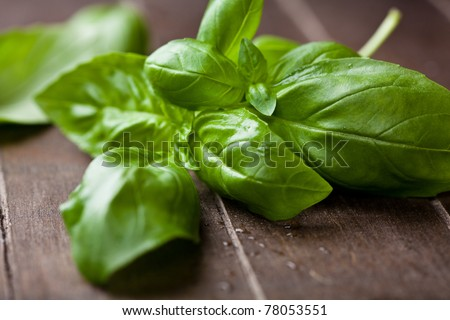Fresh basil on dark wooden background - stock photo