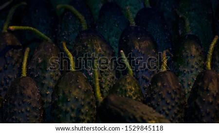 fresh batch of fresh cucumbers