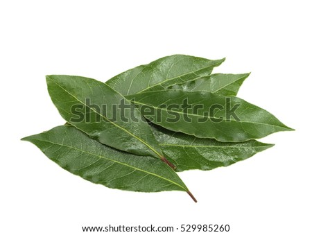 Fresh bay leaves isolated, without shadow #529985260