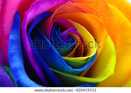 Shutterstock Fresh beautiful multicolor roses flower for floral background